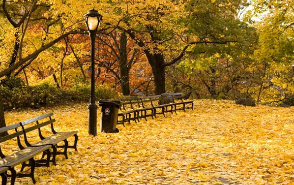 Lãng mạn mùa thu nước Mỹ