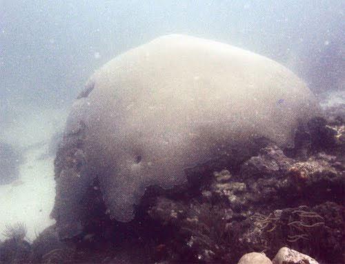 Những sinh vật cổ xưa nhất trên trái đất còn tồn tại ngày nay