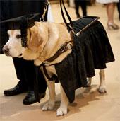 Chú chó được nhận bằng thạc sĩ của chính phủ Mỹ