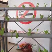 Mô hình trồng rau thủy canh đoạt giải nhất