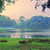 Năm 2020, Việt Nam có 41 khu bảo tồn đa dạng sinh học