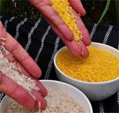 Giống gạo mới bổ sung dinh dưỡng cho trẻ em nghèo
