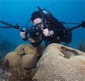 50% san hô trên toàn thế giới đã biến mất