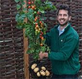 Độc đáo cây gốc khoai tây, ngọn cà chua