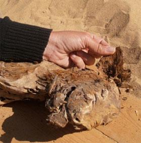 Khảo cổ xác ướp chó thời Ai Cập cổ đại