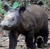 Phát hiện loài tê giác cổ đại chưa từng thấy ở Thái Lan