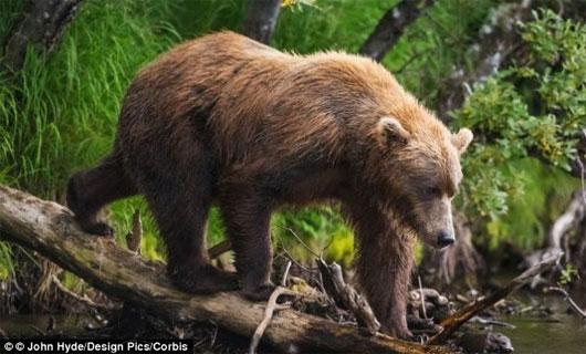 """Gấu cái cũng soi """"cậu nhỏ"""", kén bạn tình"""