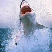 """Chuyện chưa biết về """"quái vật trắng"""" ở đại dương"""