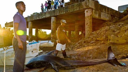 Sóng định vị khiến cá voi chết hàng loạt