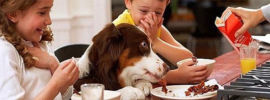 """Khả năng """"đọc vị"""" con người siêu phàm của loài chó"""