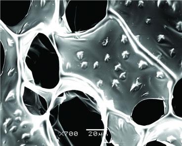 Kính hiển vi điện tử quét (SEM) hình ảnh của dây nano
