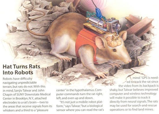 Nghiên cứu thành công tiểu não nhân tạo
