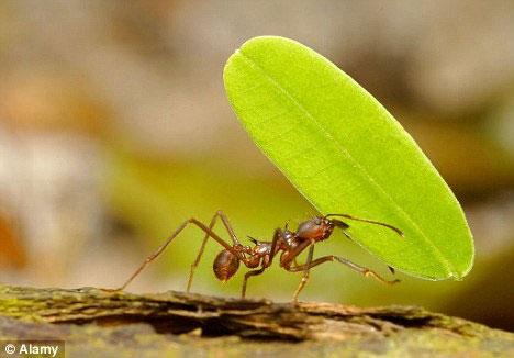 Video: Cấu trúc của tổ kiến