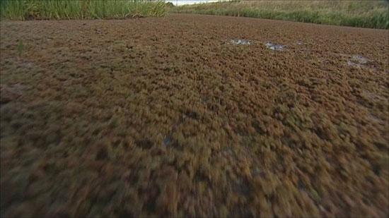 Giải pháp diệt bèo hoa dâu trên sông Till
