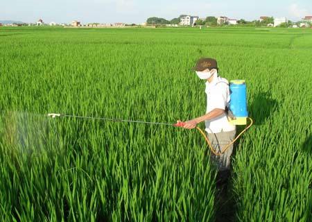 Lạm dụng thuốc trừ sâu gây phát thải khí nhà kính