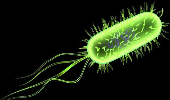 Cảnh giác với vi khuẩn gây chết người khi dùng thực phẩm