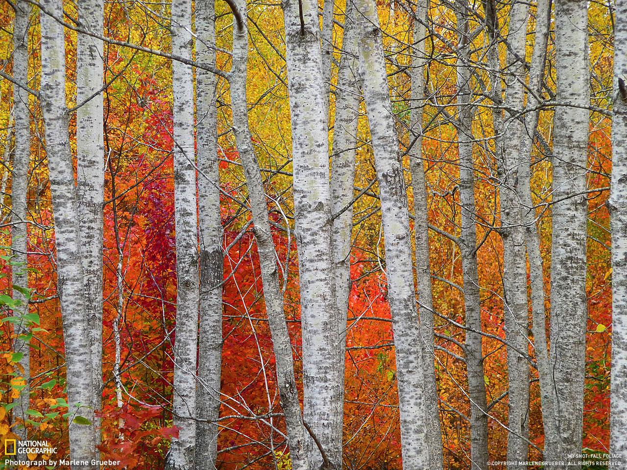 Sắc màu mùa thu