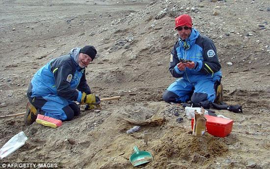 Các nhà khoa học khai quật phần còn lại của những con khủng long được cho là một người họ hàng của cá voi hiện đại