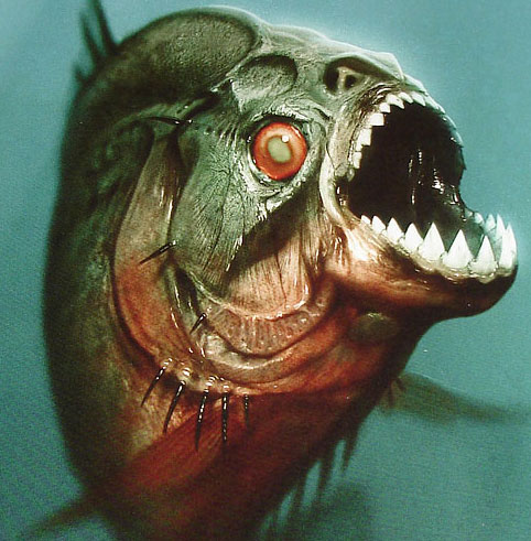 Cá ăn thịt biết nói