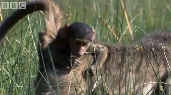 Video: Cuộc sống động vật tại Great Plains