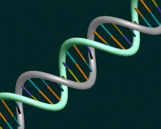 Chế tạo bộ vi xử lý sinh học phức tạp từ các cổng logic sinh học