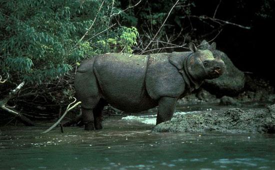 Theo WWF, tê giác Java ở vườn quốc gia Cát Tiên được phát hiện đã chết với vết đạn bị bắn vào chân và cái sừng biến mất vào tháng 4 năm ngoái. Loài tê giác một sừng Java tuyệt chủng ở Việt Nam. Hiện loài này vẫn còn một số cá thể và đang được bảo tồn ở Indonesia.