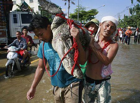 Video: Bắt cá sấu sổng chuồng tại Thái Lan