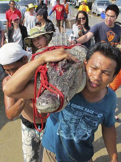 Một số nguồn tin cho biết hơn 100 con cá sấu được cho là đã bị xổng chuồng tại các trang trại ở phía bắc Thái Lan. Tuy nhiên, không ai biết chính xác là bao nhiêu.