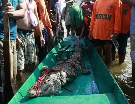 Chính phủ Thái Lan đã lưu ý người dân cảnh giác về nguy cơ cá sấu xổng chuồng kể từ khi nước lũ dâng cao hồi đầu tháng này.