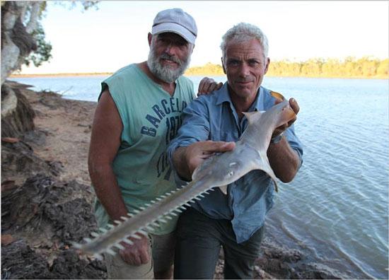 Loài cá đao khổng lồ ở Australia