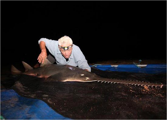 Jeremy Wade, nhà động vật học phải mất 20 năm mới có thể câu được một con cá đao khổng lồ.