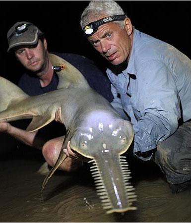 Loài cá này rất khó sống trong điều kiện nuôi nhốt. Các chuyên gia động vật cũng ít biết về điều kiện sinh sống và khả năng giao phối của chúng.