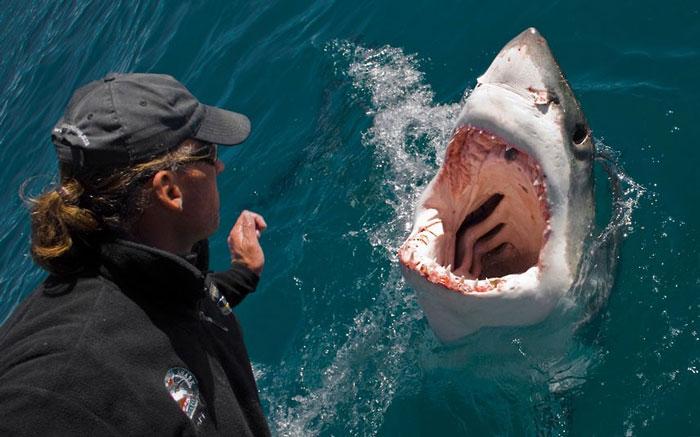 Một con cá mập trắng nhào lên khỏi mặt nước. Trước mặt nó là nhiếp ảnh gia người Anh David Caravias. David đang cố tái hiện một cảnh trong phim Jaws bằng cách đu đưa một xâu cá ngừ ở mạn thuyền nhằm dụ cá mập.