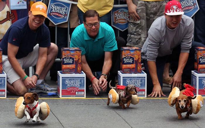 Những chú chó tham gia cuộc thi Running of the Wieners tổ chức tại bang Cincinnati (Mỹ).
