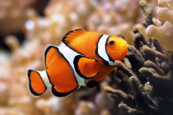Cá nhỏ hơn vì biến đổi khí hậu