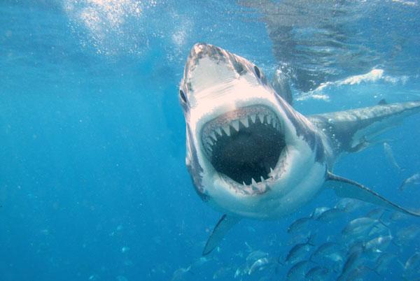 Australia nghiên cứu chế tạo áo lặn chống cá mập