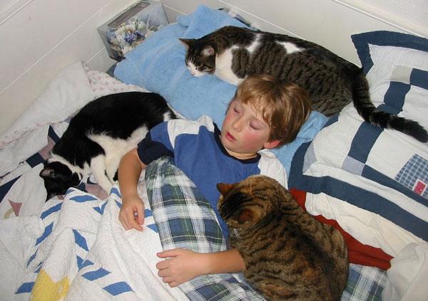 Tiếp xúc với vật nuôi khi đang cảm cúm có thể khiến căn bệnh lây lan