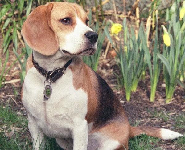 Chó có biết suy nghĩ như con người?