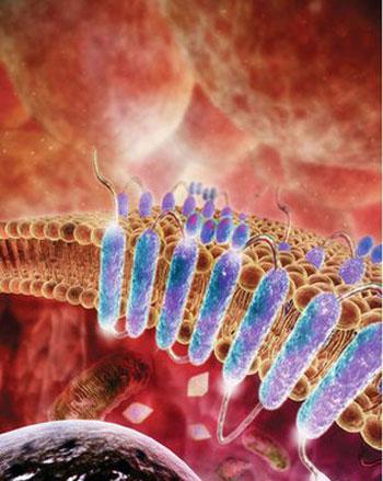 Thụ thể bảy đoạn xoắn ốc có khả năng cảm nhận các phân tử bên ngoài tế bào.