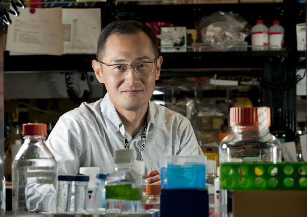 """Nobel Y học 2012 """"mở đường"""" chữa bệnh nan y"""