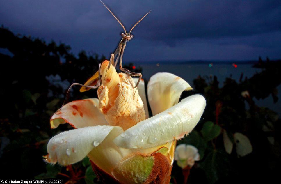 Những bức ảnh tuyệt đẹp về thế giới động vật