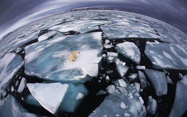 Một con gấu trắng mắc kẹt trên tảng băng ở Svalbard (quần đảo giữa Na Uy và Bắc Cực).