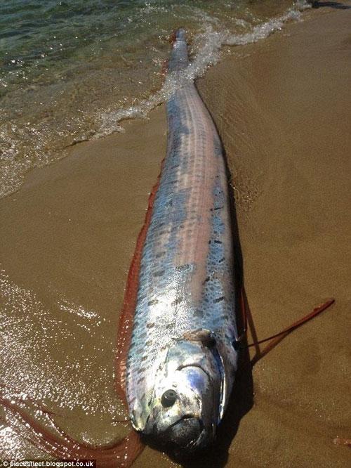 Cá 6m dạt vào bờ biển Mexico.