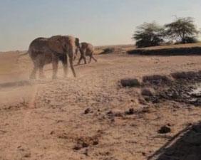Video: Giải cứu voi mắc kẹt dưới hố sâu