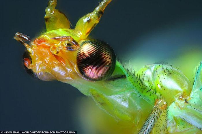 Ảnh chụp qua kính hiển vi đẹp nhất năm 2012