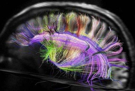 Cấu tạo bộ não thay đổi trong các kỳ thi