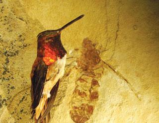 Tại sao côn trùng không lớn như người?