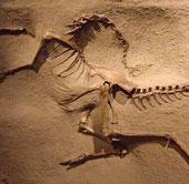 Lần đầu phát hiện dấu tích về khủng long có lông vũ tại Bắc Mỹ