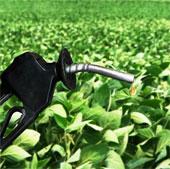 EP ủng hộ việc chuyển đổi sử dụng nhiên liệu sinh học