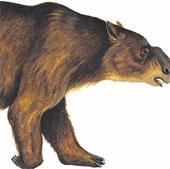 Phát hiện hóa thạch loài gấu túi đặc biệt ở Australia